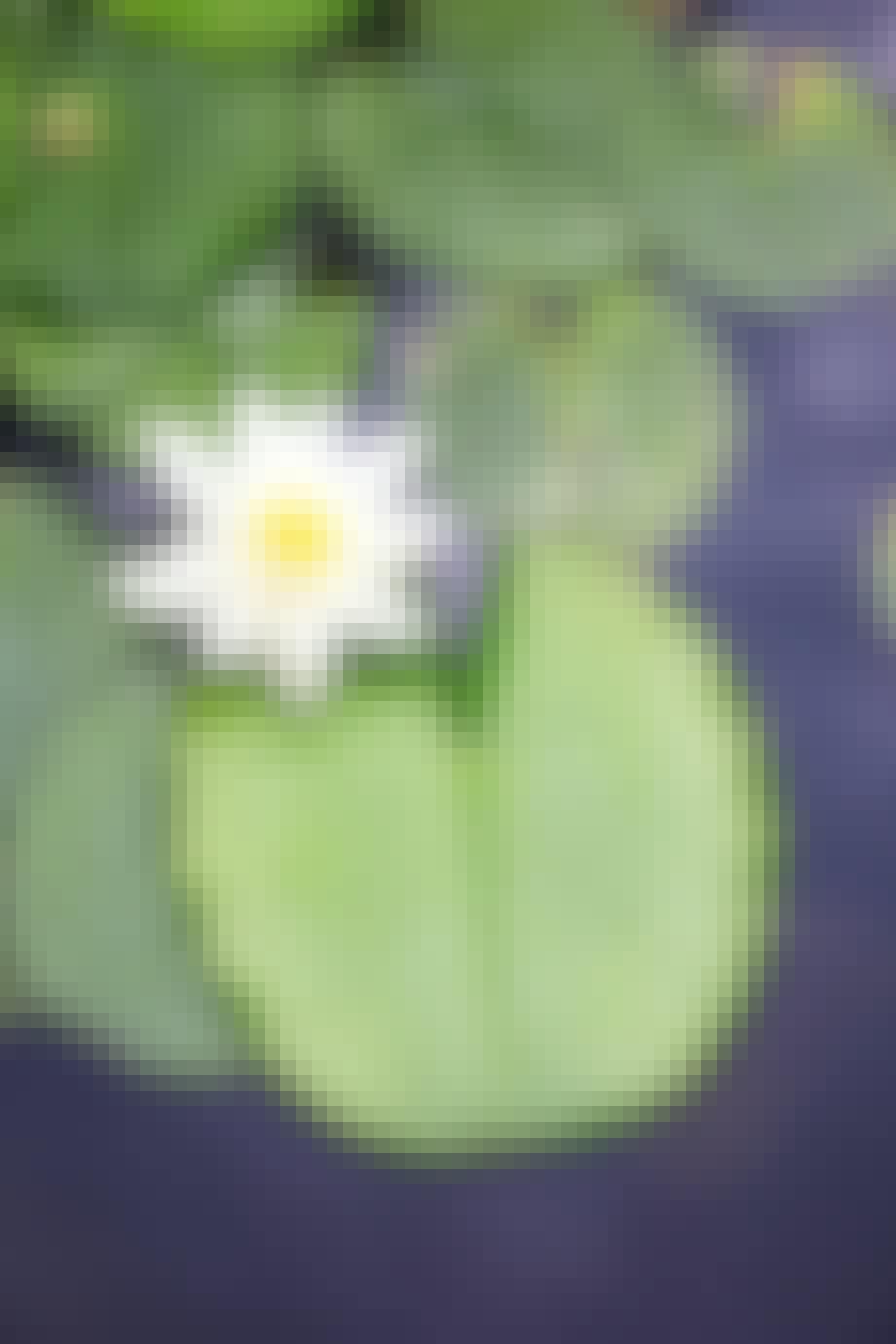 3. Velg planter med alle sansene