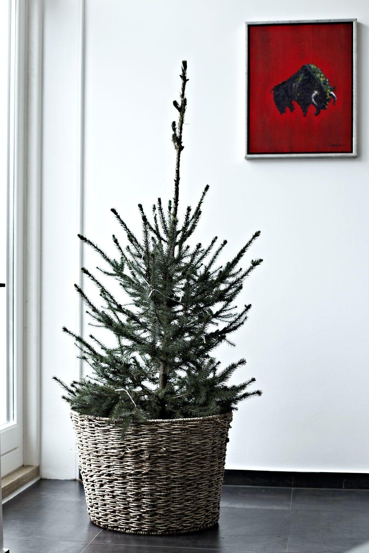 Prøv deg frem med flere juletrær