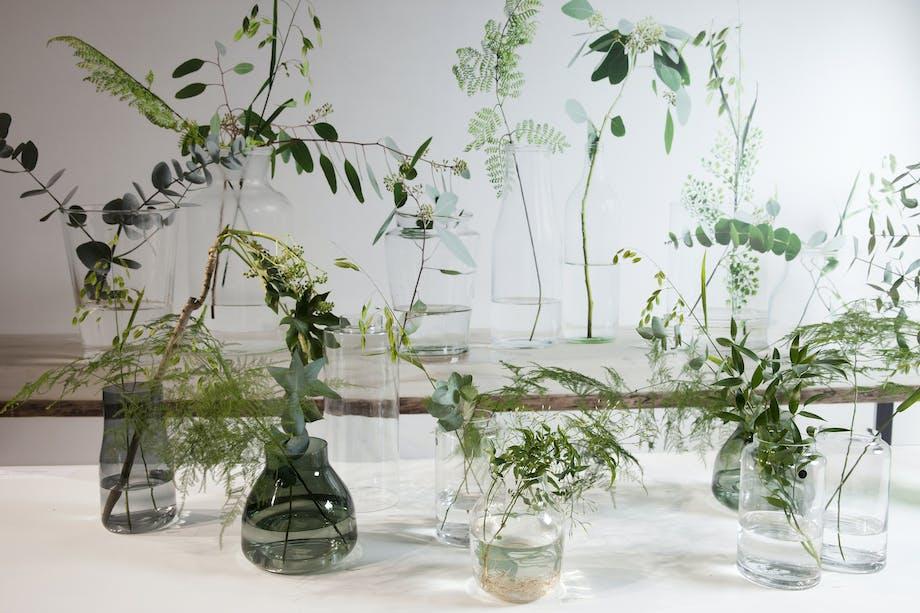 Botanisk lek