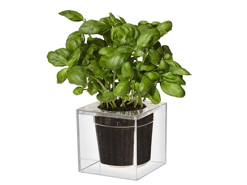 Stilig potte til krydderurter og planter