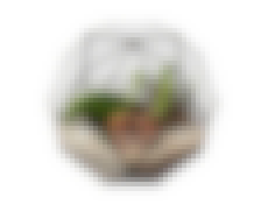 Planteball