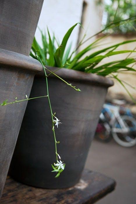 Enkle planteriben