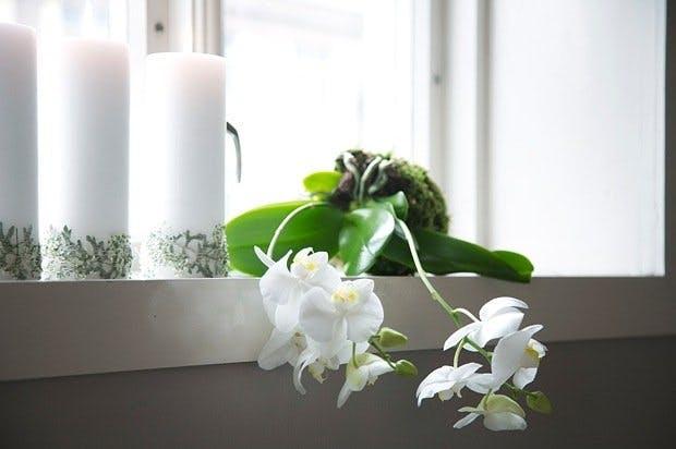 Orkidé i mose