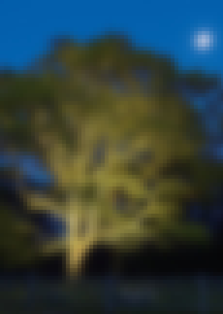 Lys opp trærne