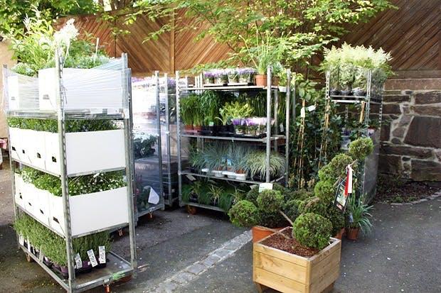 Overflod av grønne planter