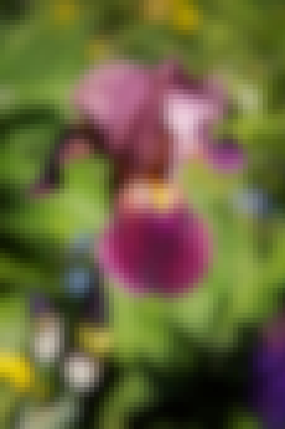Spesielle blomster