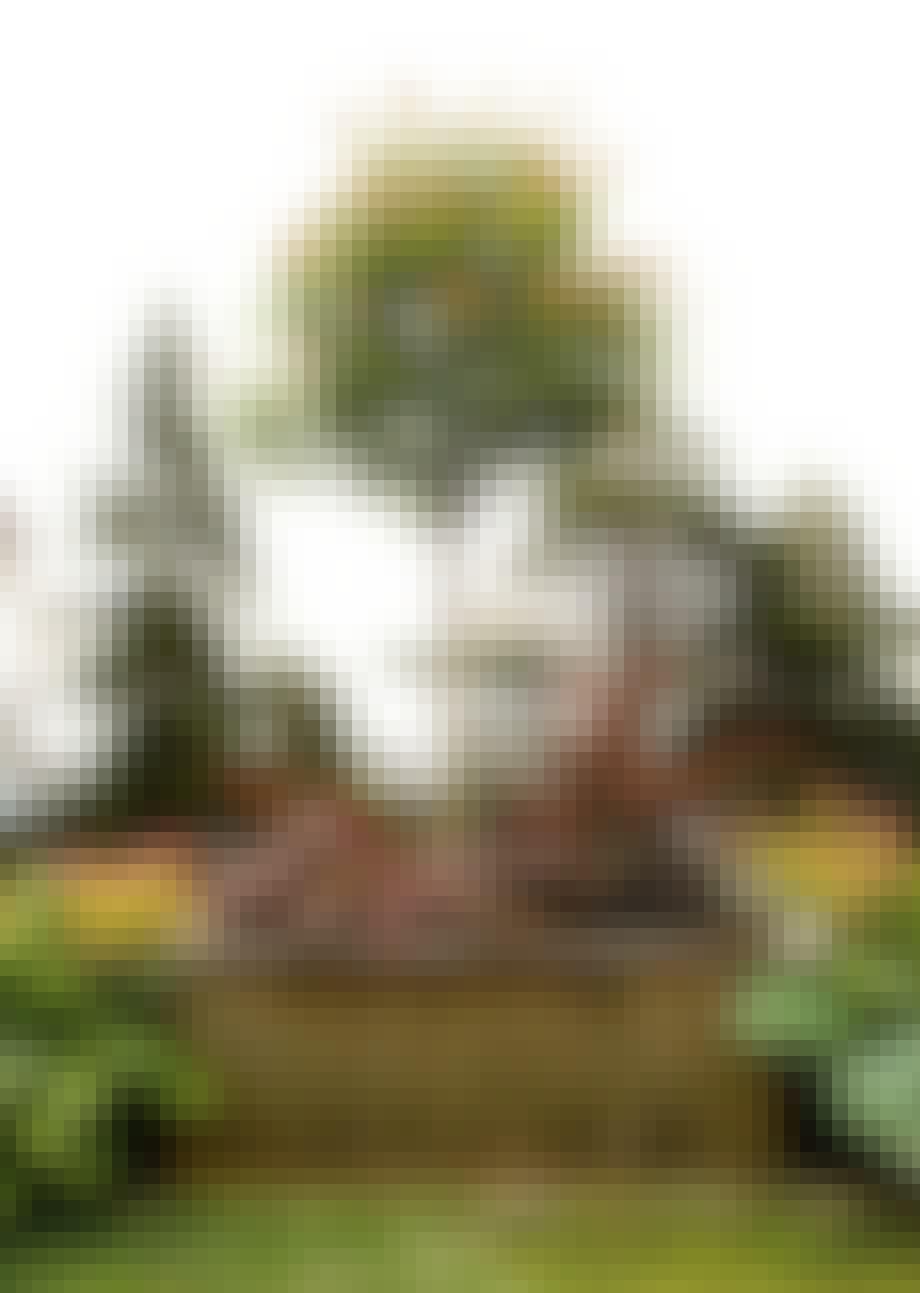 Plant busker i kasser