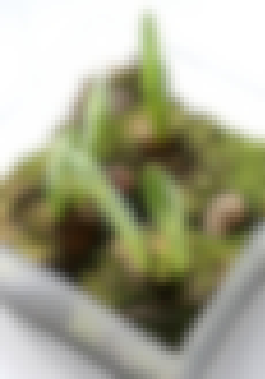 Skog av amaryllis