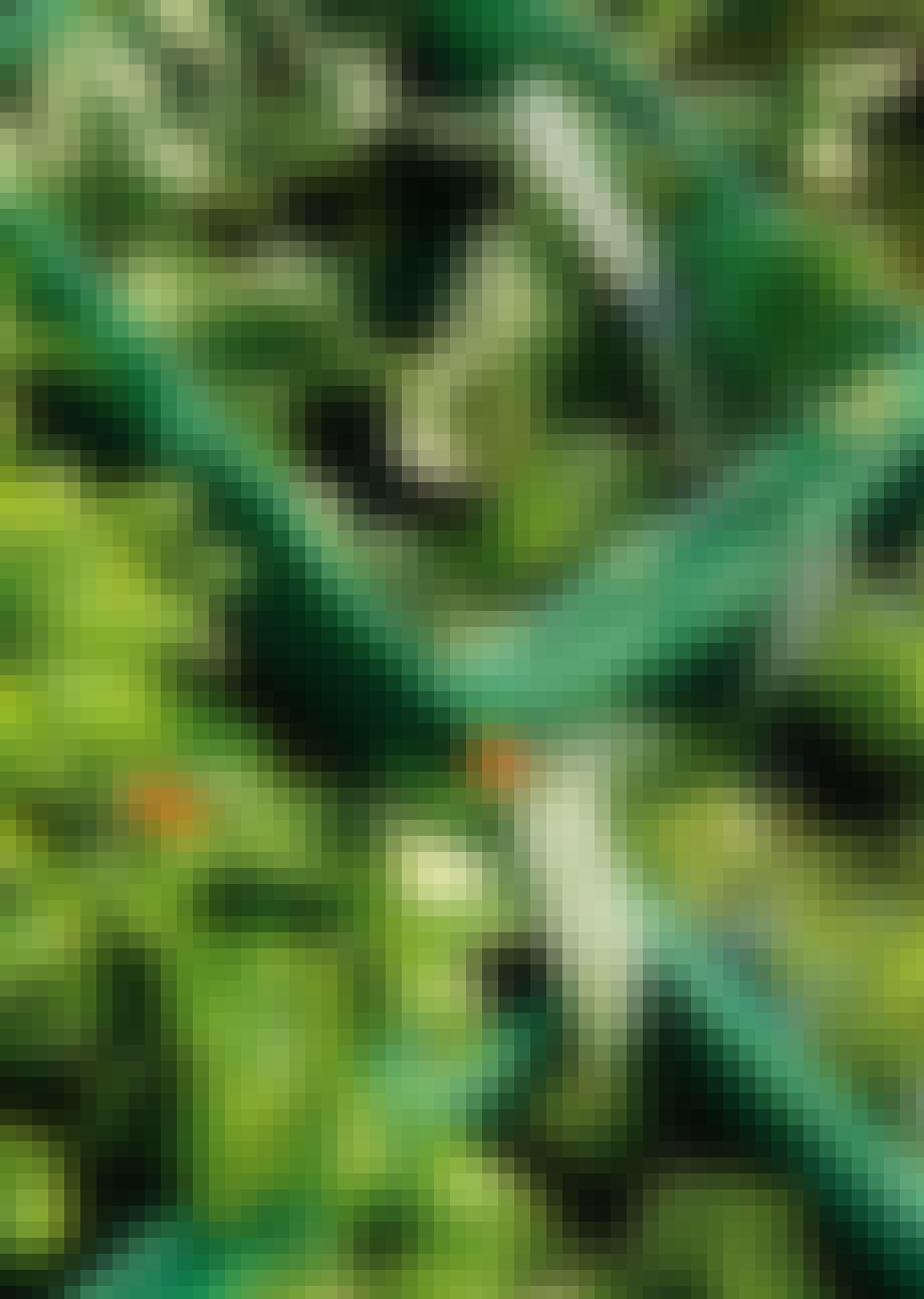 Planteutsalg
