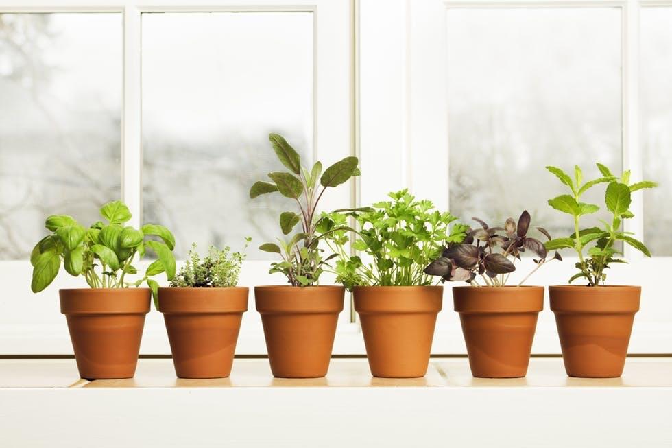 Slik tar du stiklinger av plantene dine