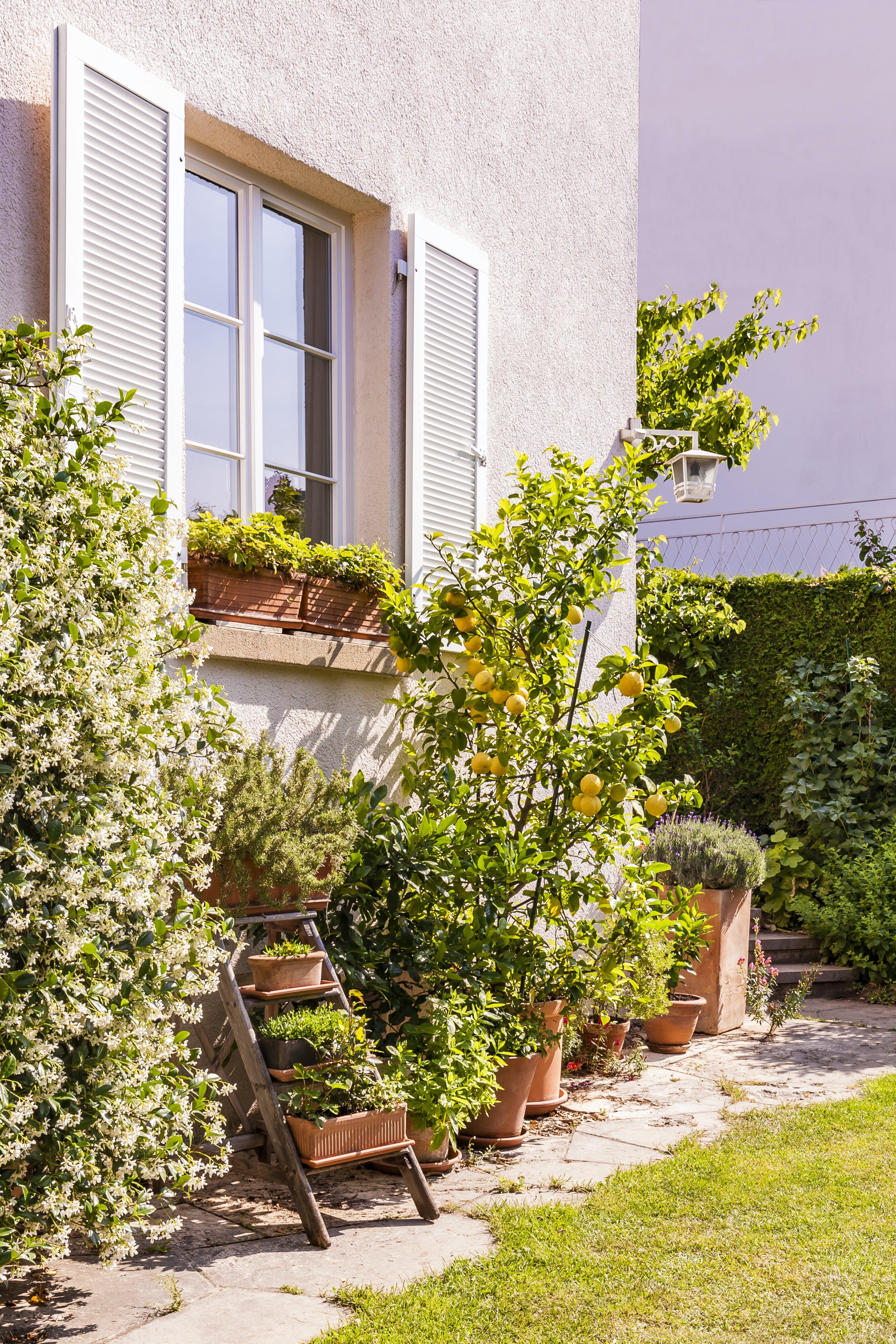 Backyard with flowers