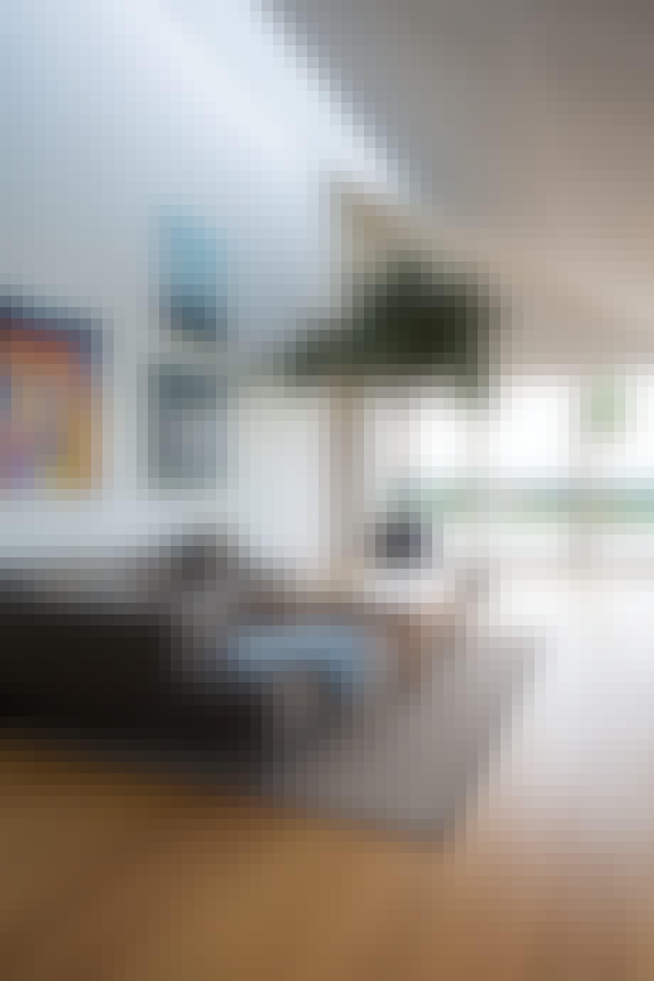 stue store indendørs planter stuebirk