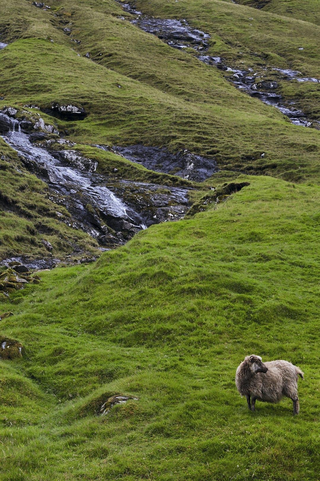 Færøernes grønne natur