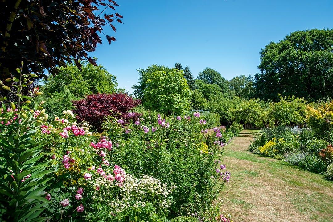 Rosenbuske have grøn oase frugttræer blomsterbede