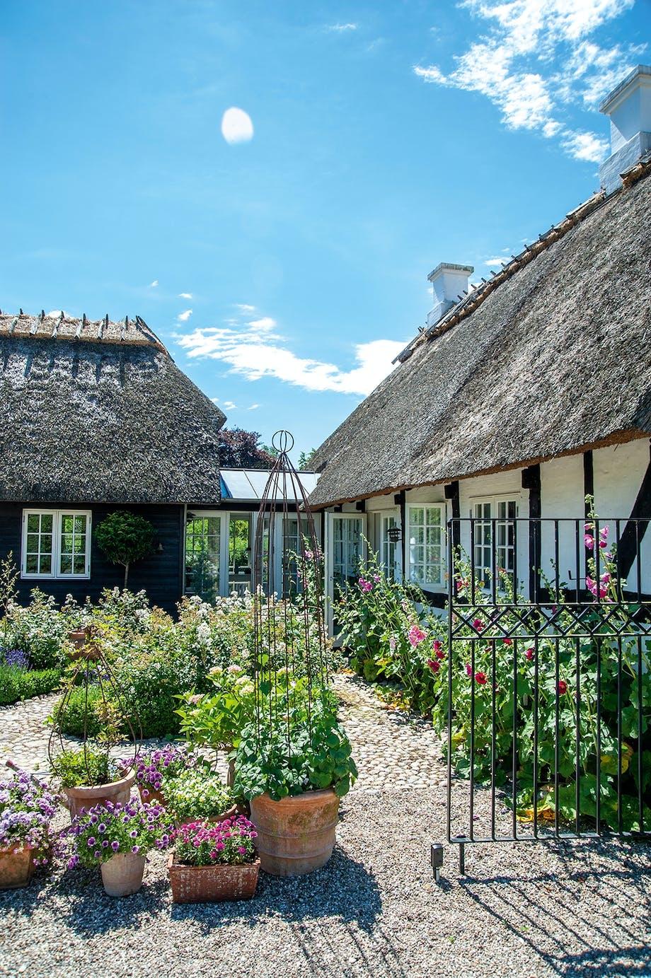 Gårdhave roser klatrestativer til blomster potter og krukker