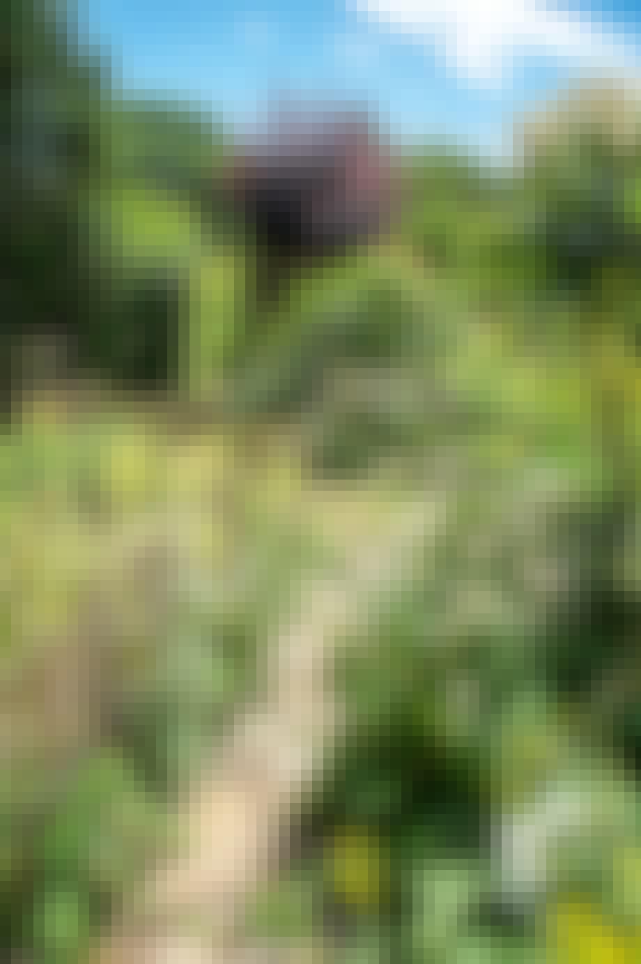 Køkkenhave bæbed urtehave frugttræer økologi