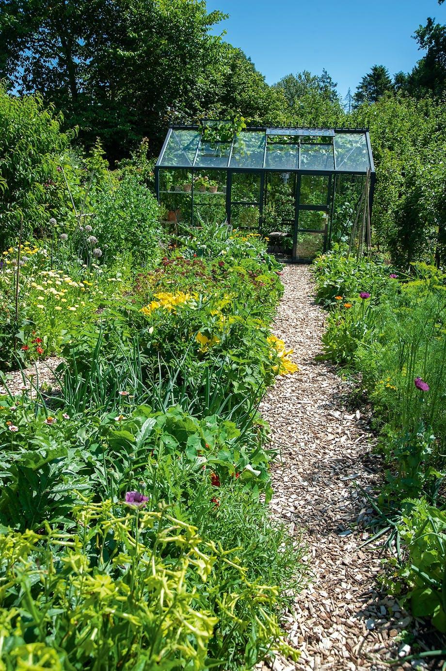 planteskole frøblandinger stauder stiklinger og krydderurter