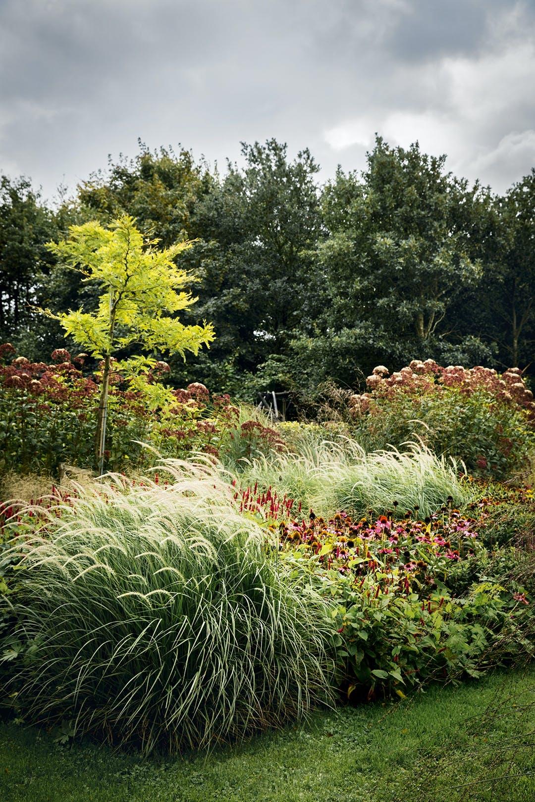Have med græsser og stauder træer