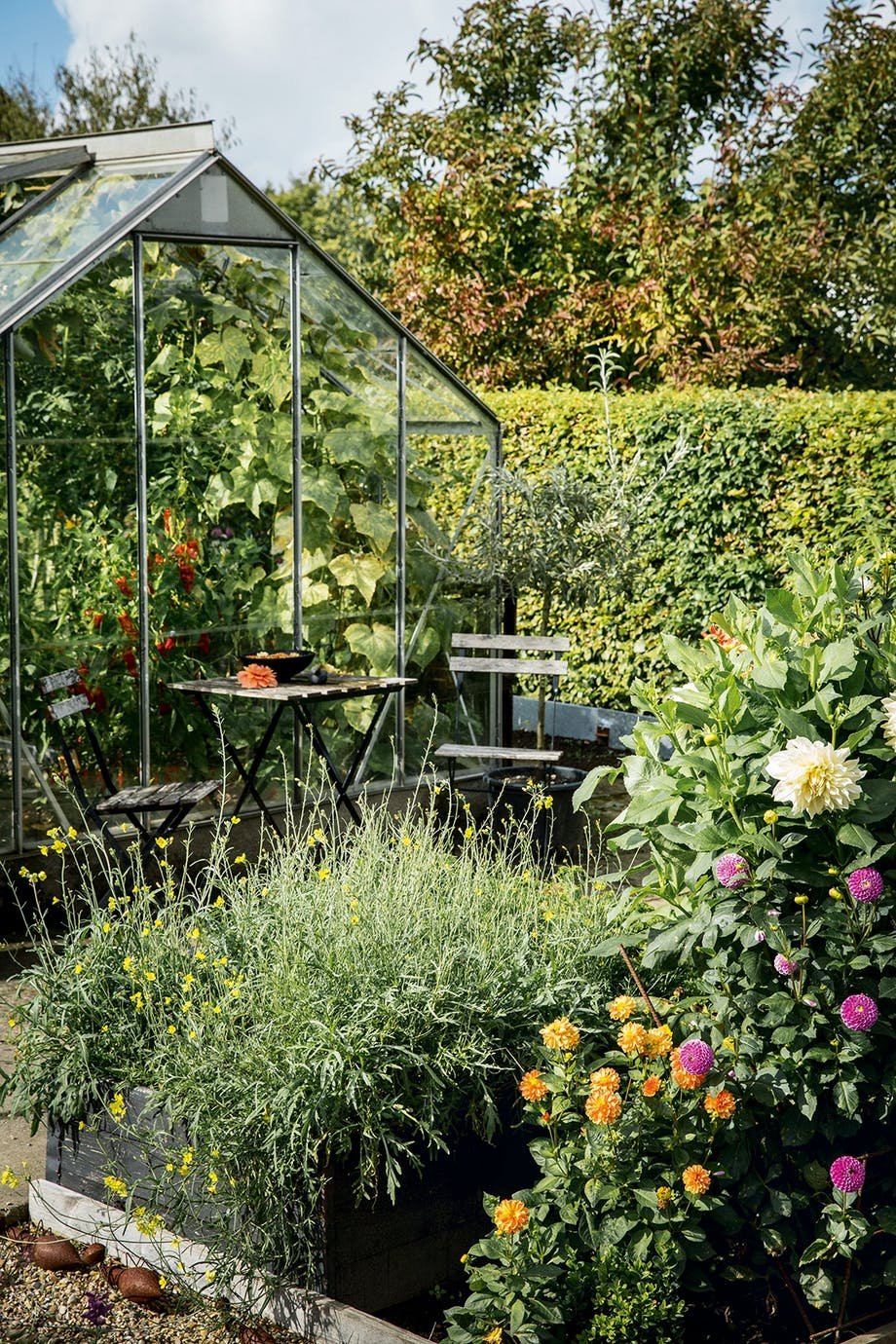 drivhus blomsterbed dahliaer grøntsager