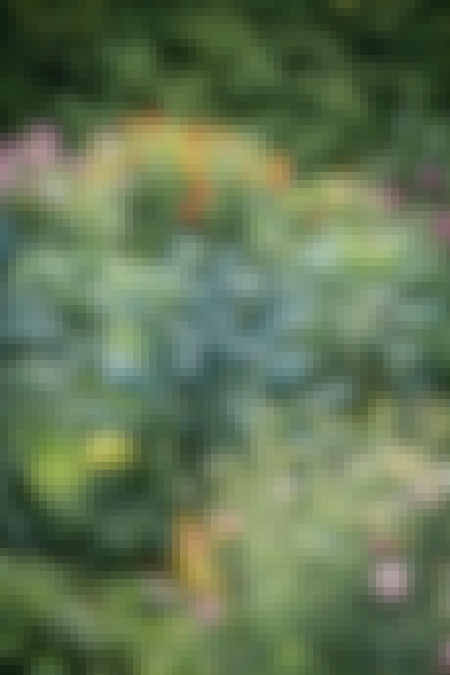 Køkkenhave dyrke grøntsager Dahlia blomster