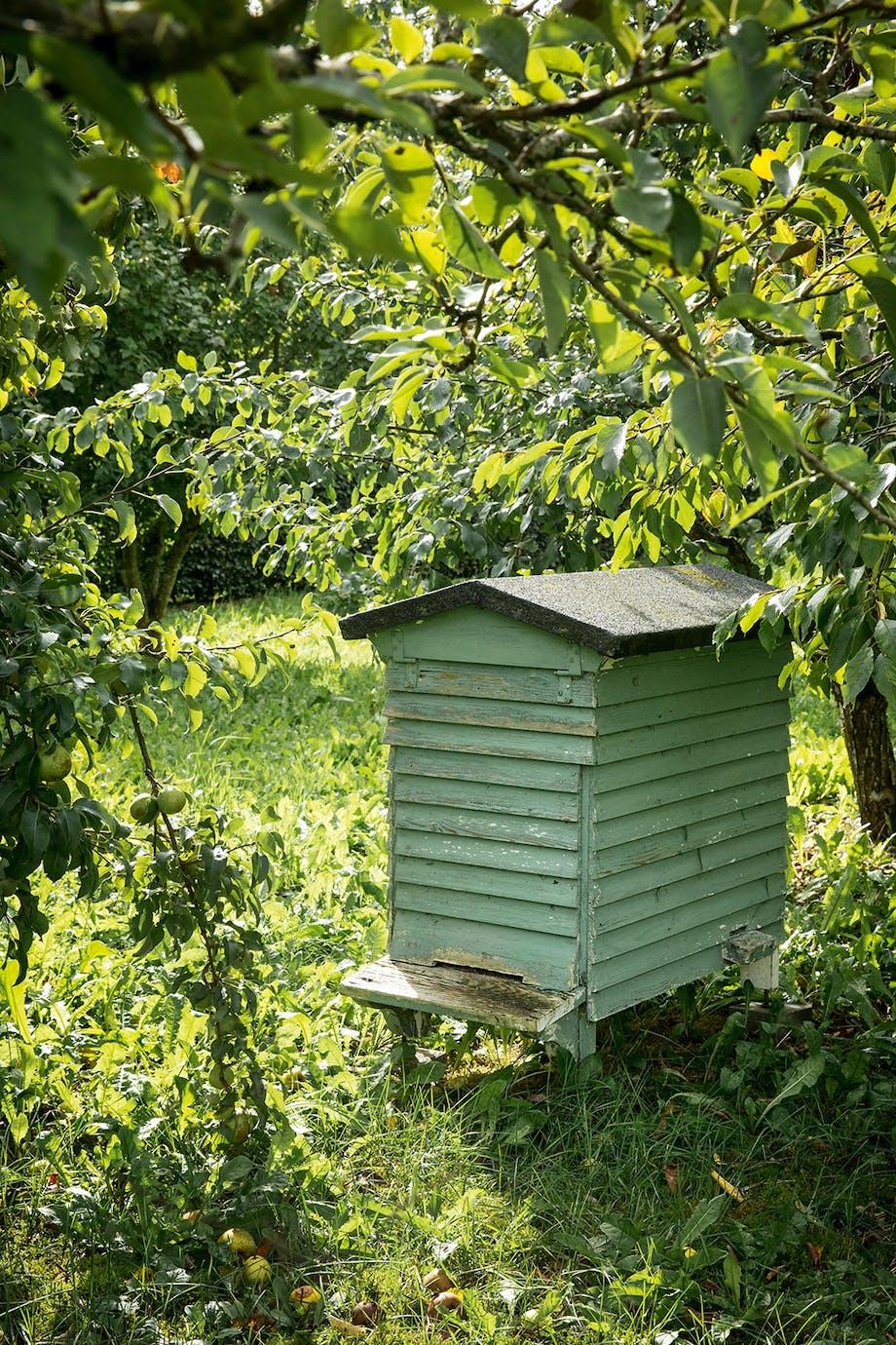 biavler honning biodiversitet æbletræer