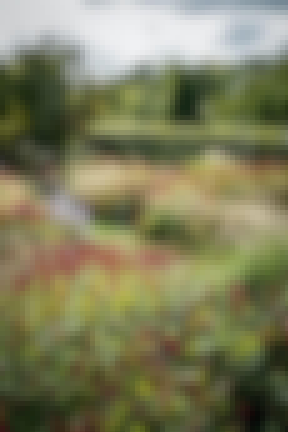 græshave græsser klippede hække stauder