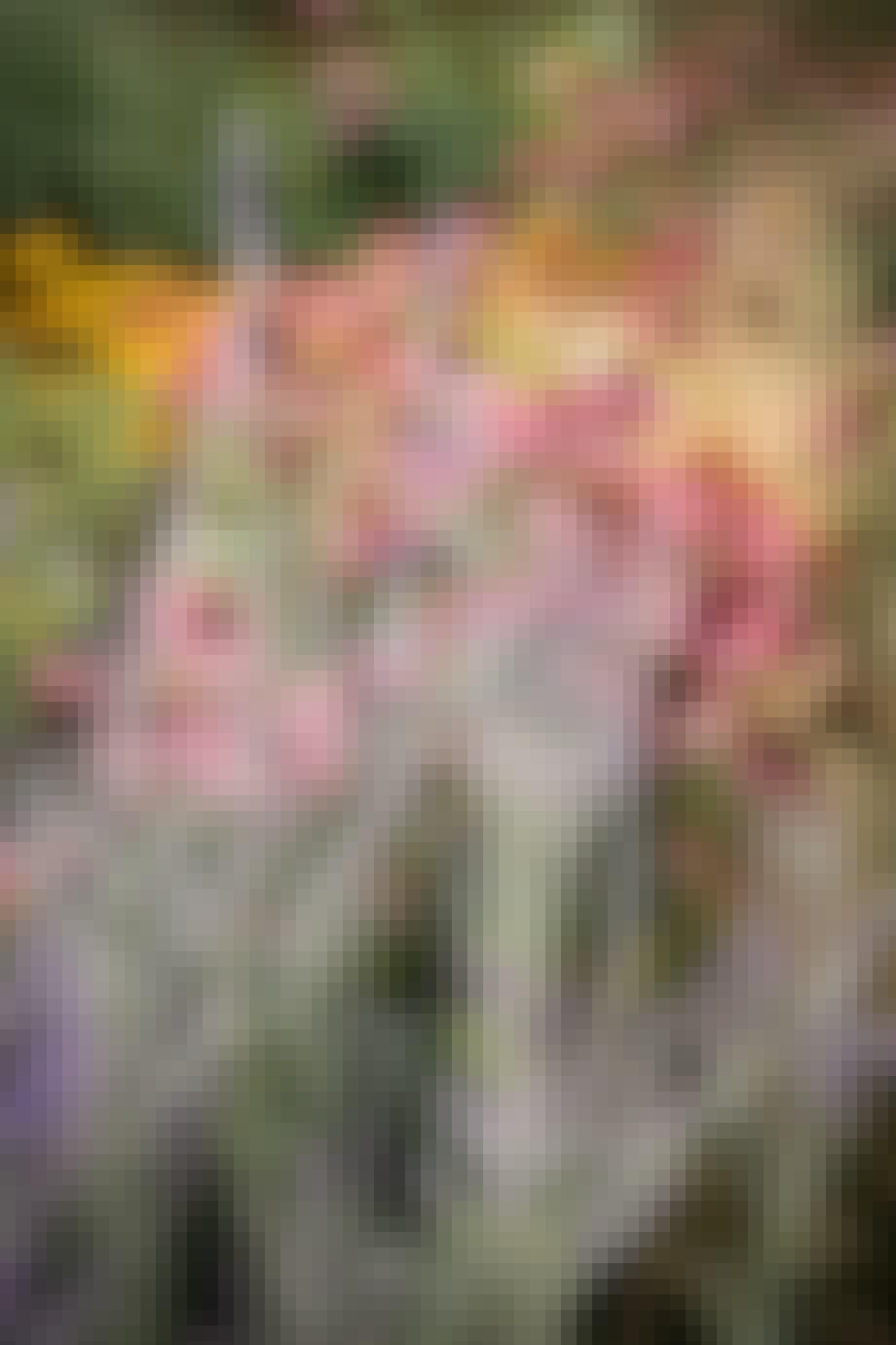 blomsterbed russisk salvie og Echinacea