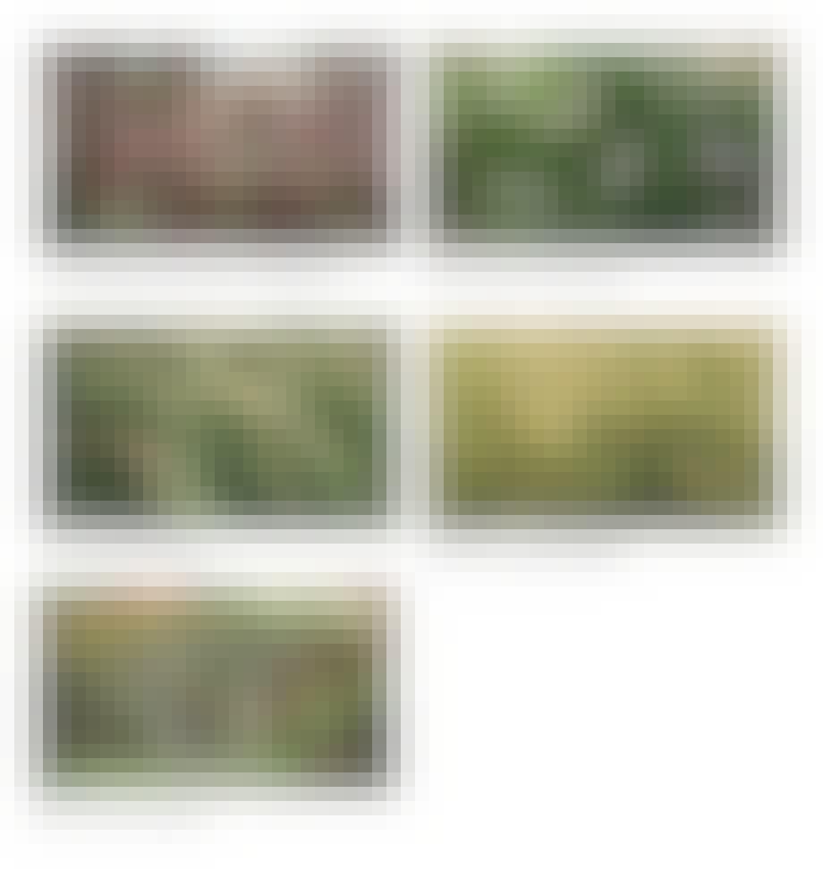 fem typer græsser som kan klare rusk, regn, blæst, sol og tørke