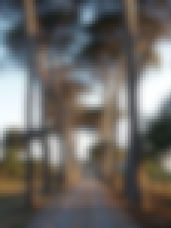 allé med høje fyrretræer neo-klassiske hus