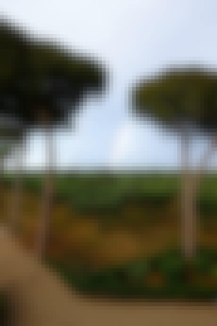 italienske landskab med oliventræer