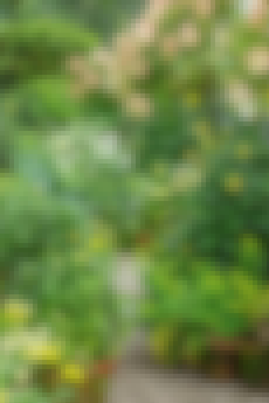 grønne planter blomser i krukker og potter krukkehave