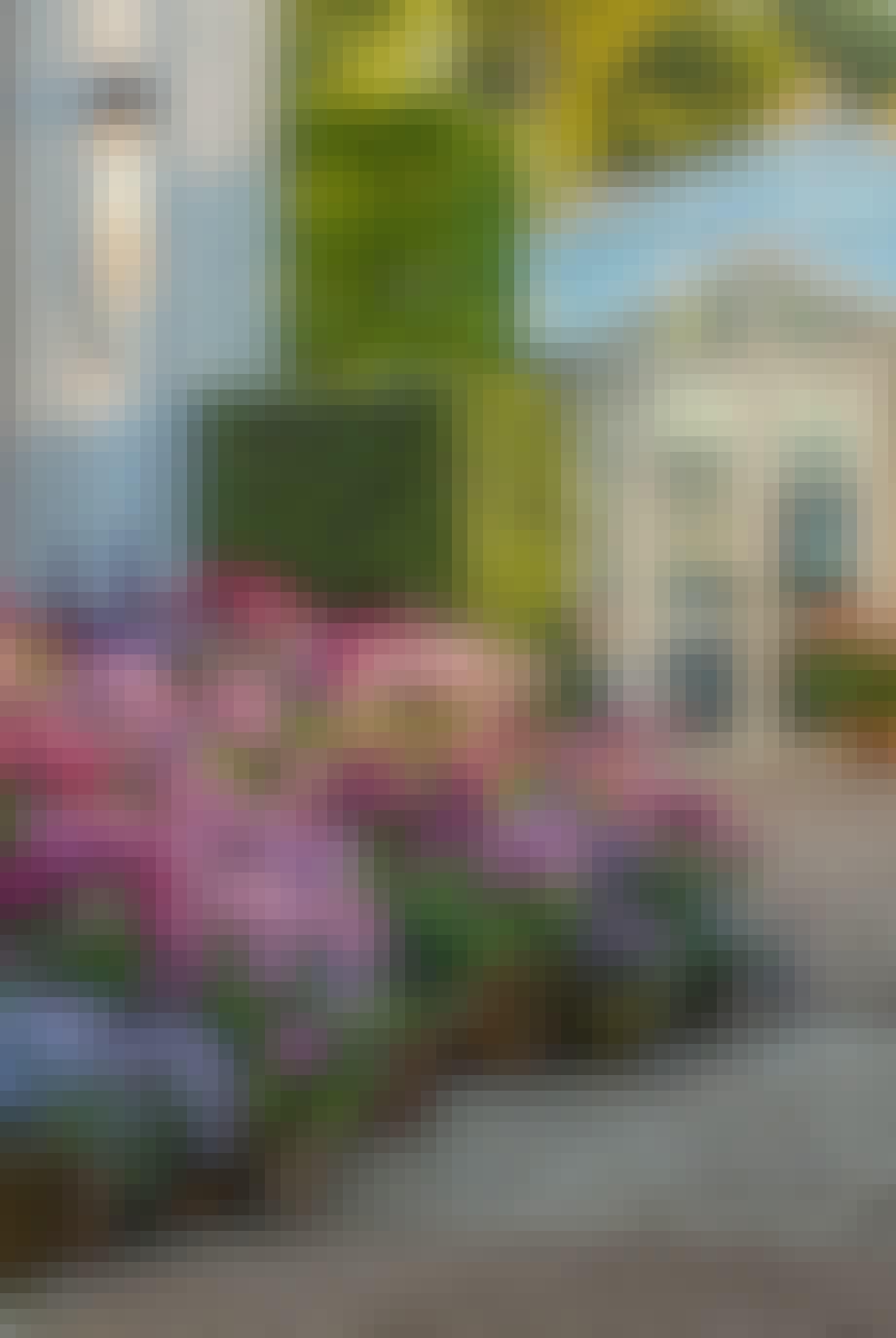tulipaner i lilla nuancer krukker og potter blomster have