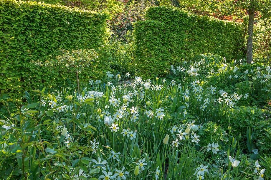 pinseliljer grøn have forår