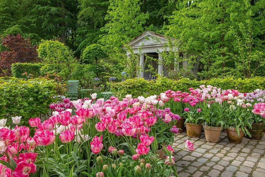 krukkehave blomster lyserøde tulipaner lille tempel