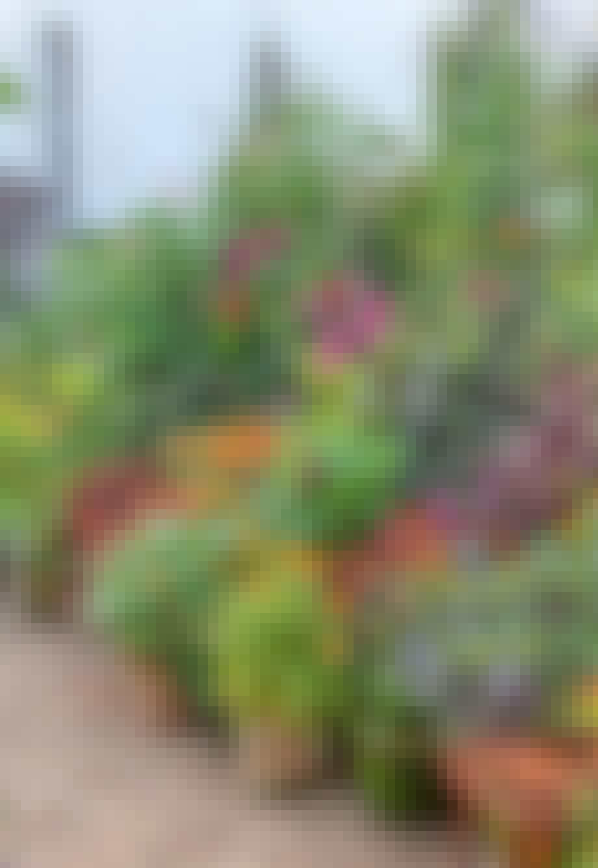 Sensommer farverig blomster i krukker og potter