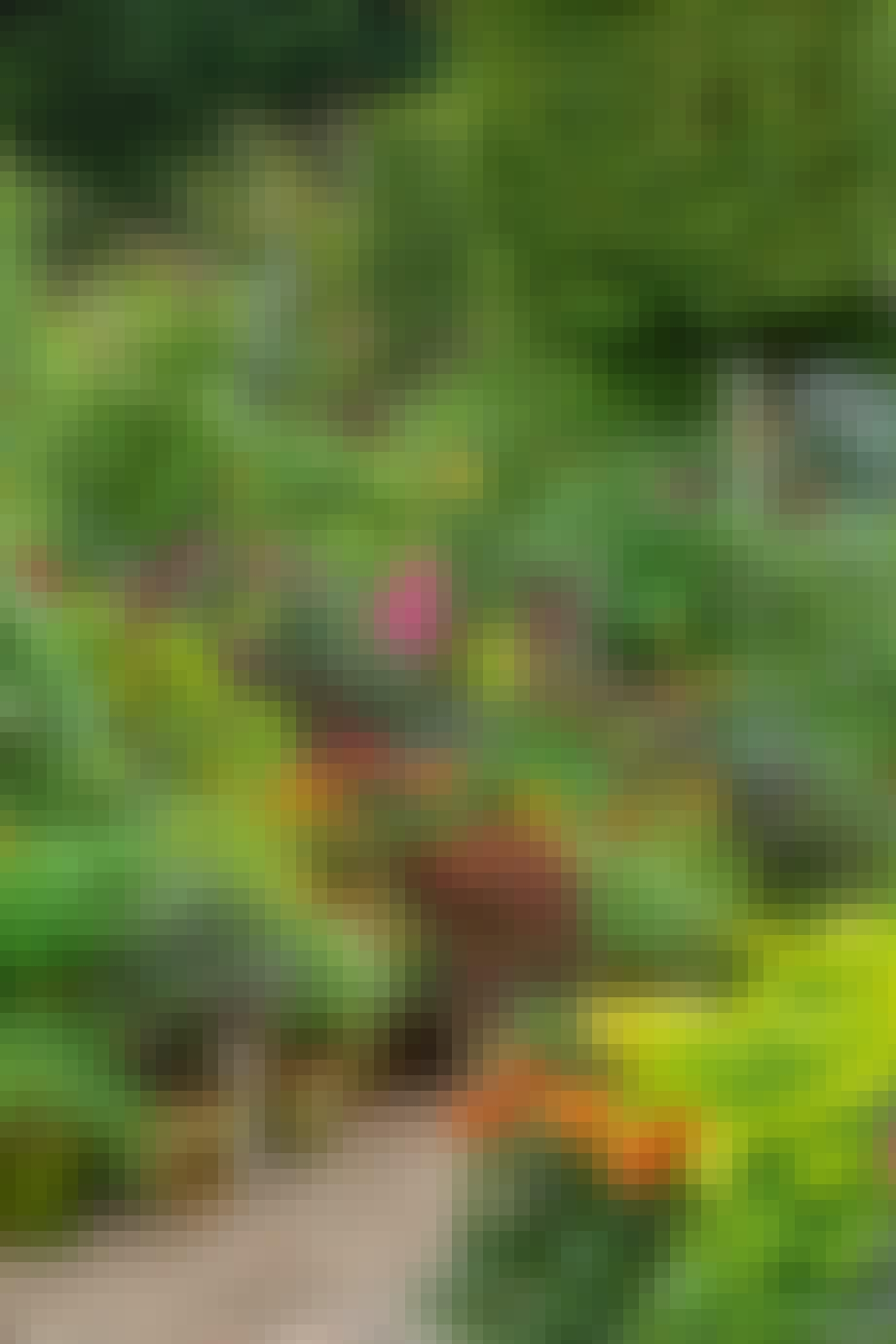 Sensommer farverige blomster og grønne planter i krukker