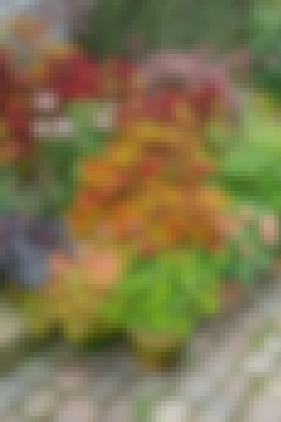 blomster og planter i krukker