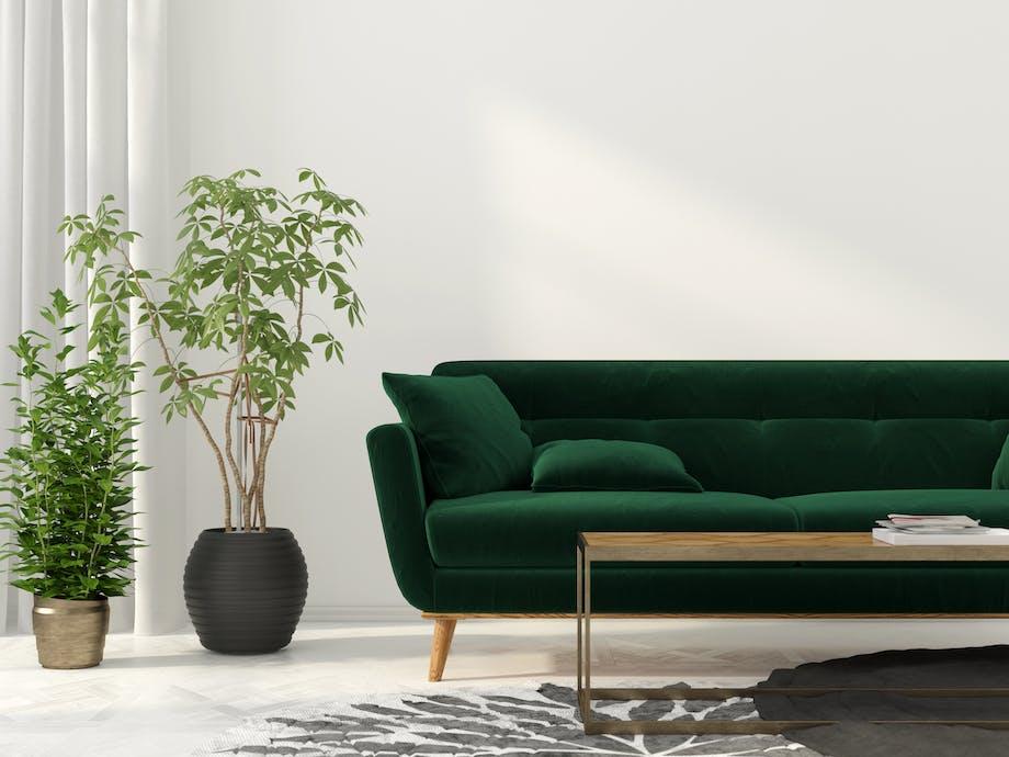 Plante til indretningen