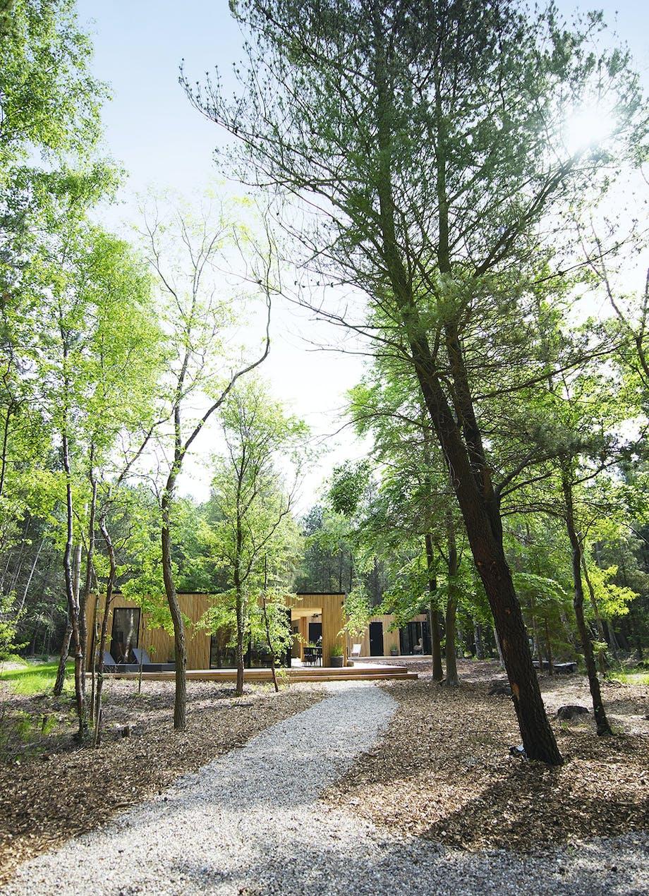 Stisystem gennem skoven op til sommerhuse