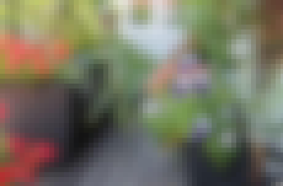 Farverige altanblomster
