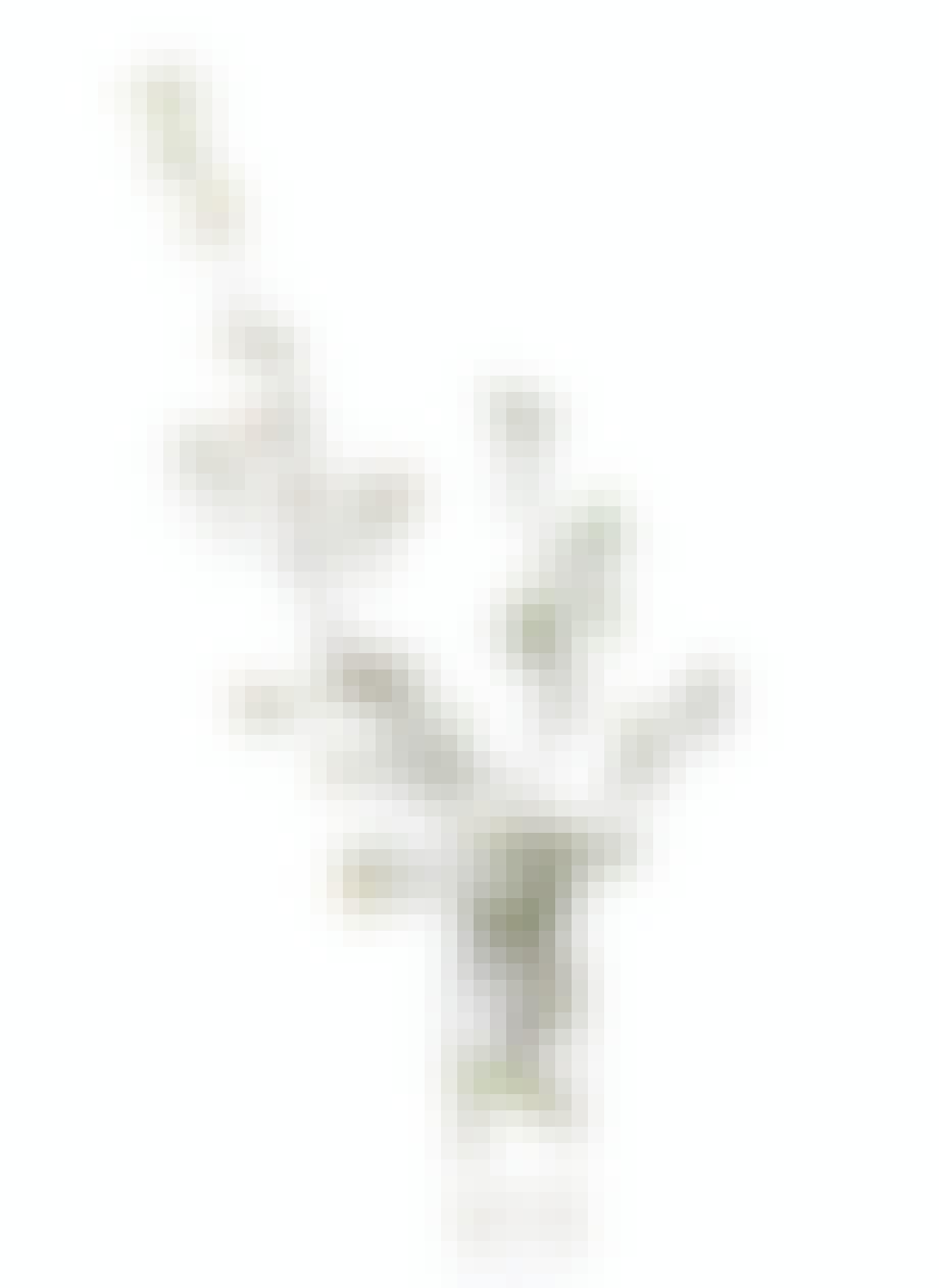 Grene fra haven i gulvvase