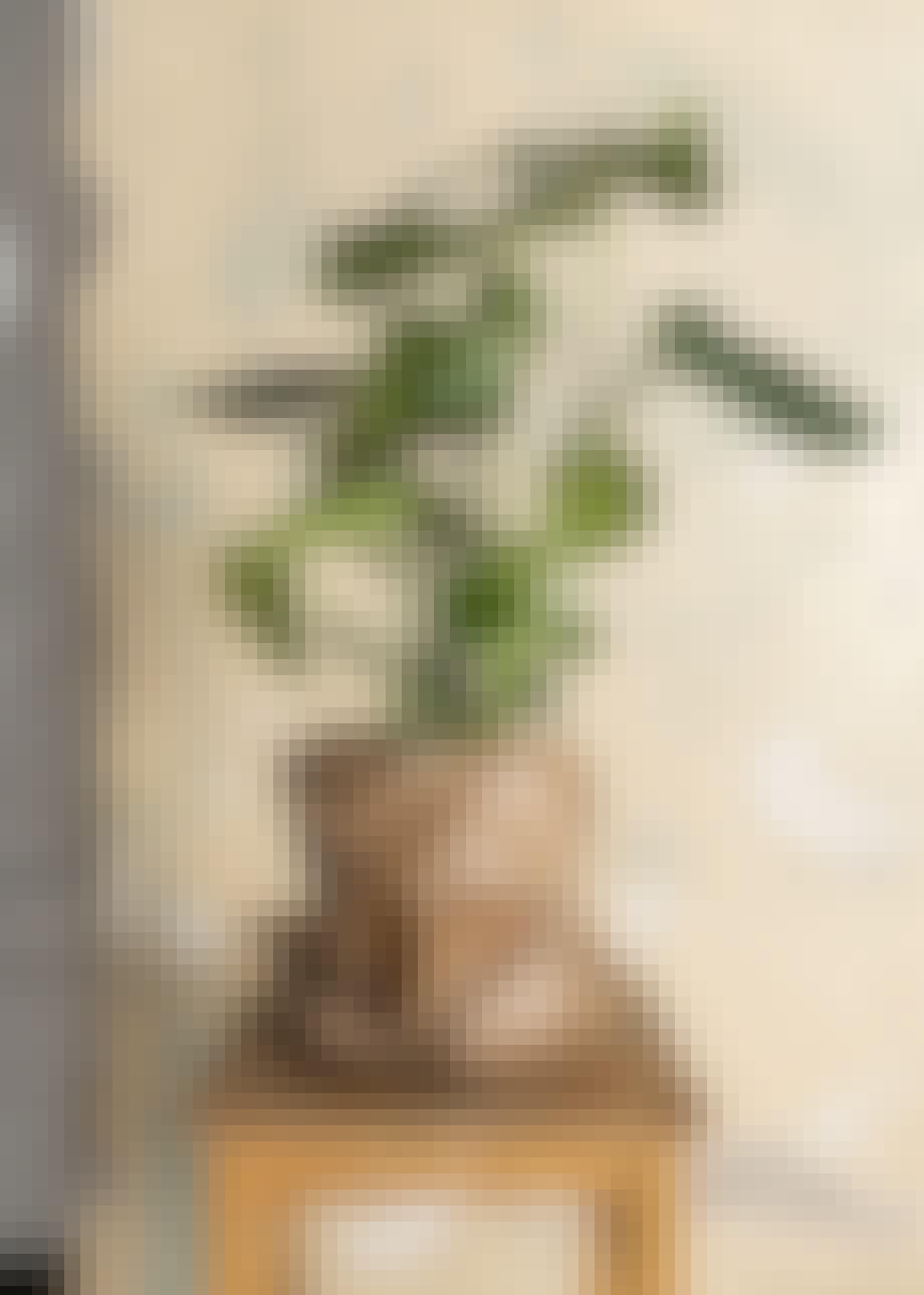 Flot grøn plante