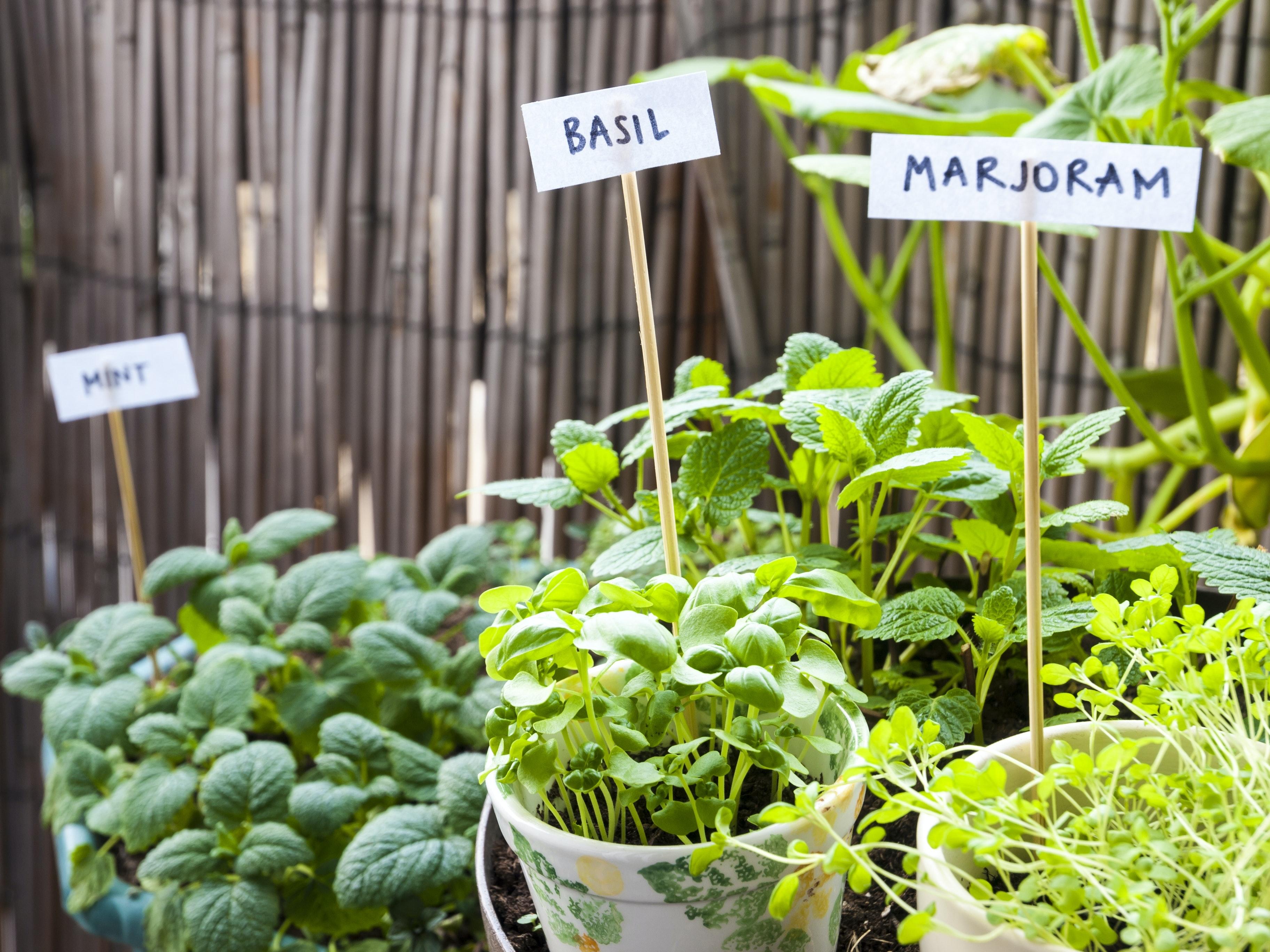 Picture of: 5 Planter Og Blomster Som Egner Sig Til Altanen Bobedre Dk