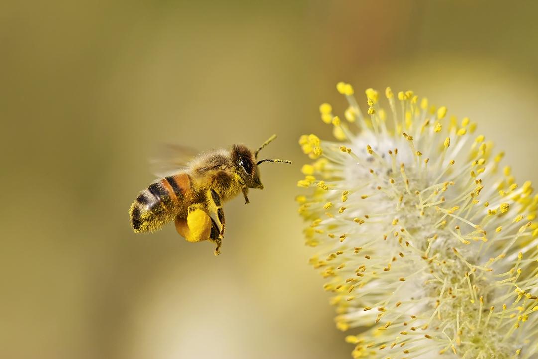 Elsker blomsterne jeg jeg bierne elsker Vand i
