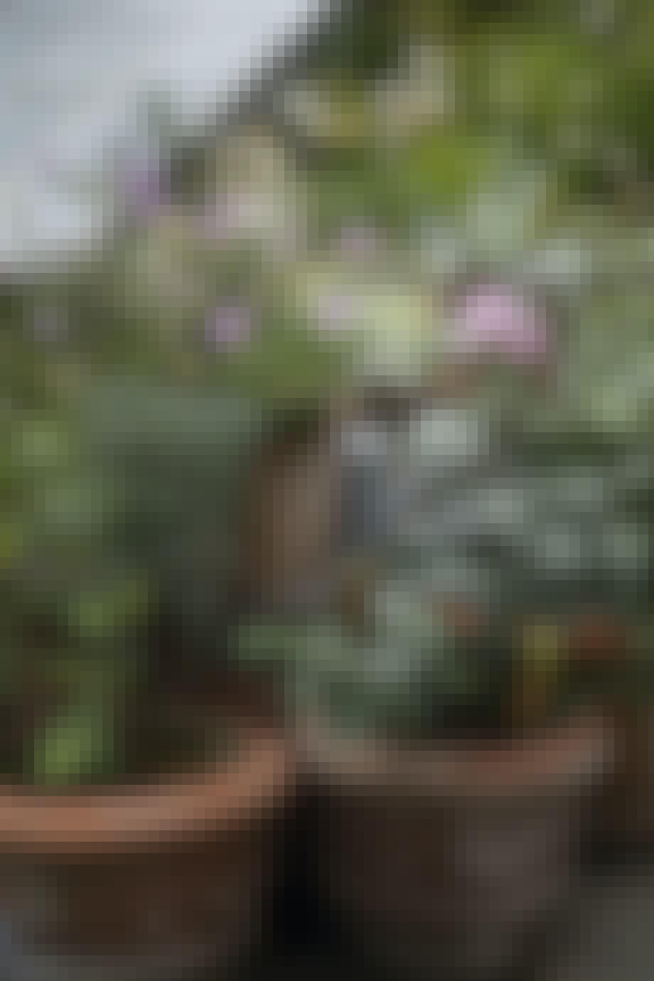 Terrasse med smukke blomsterkrukker