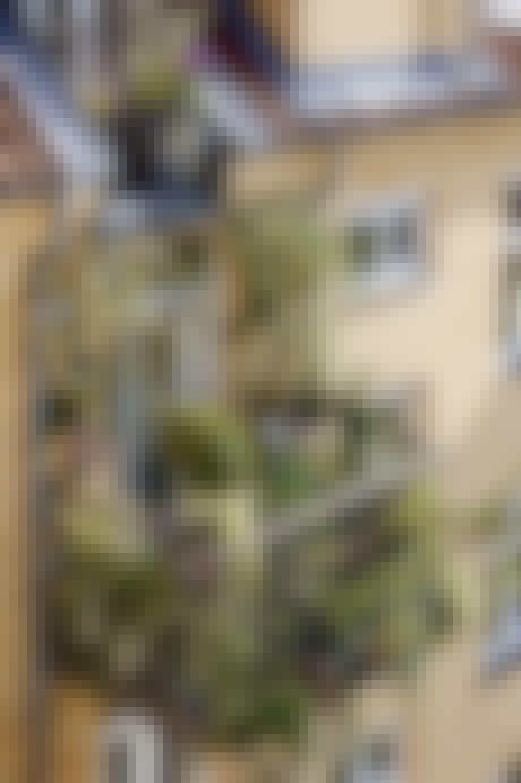 Grøn og frodig byaltan