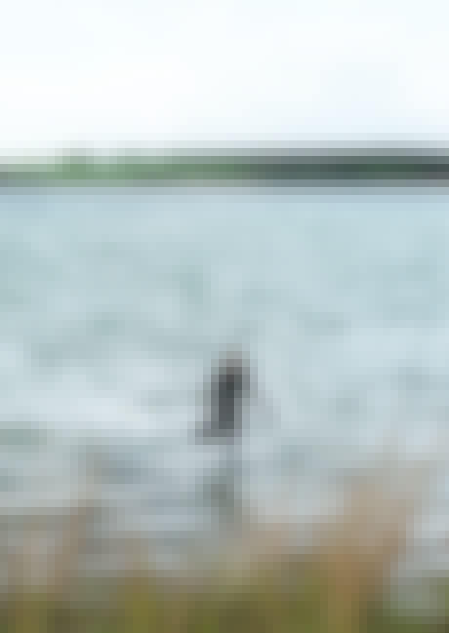Birgitte samler muslinger