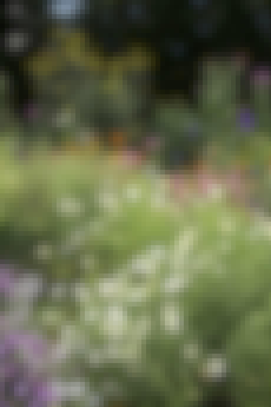 Sommerblomster