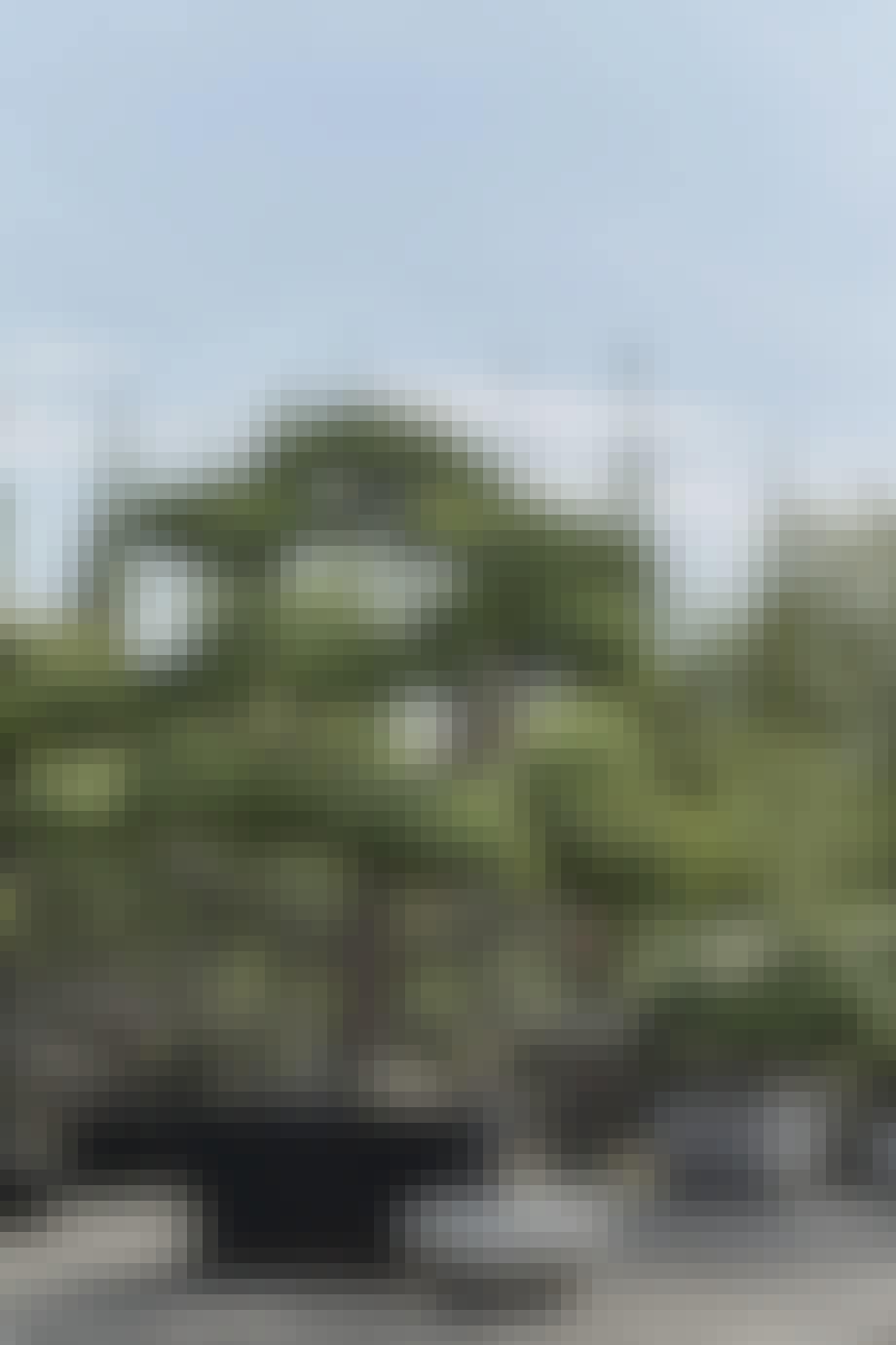 Bonsaiklippede kirsebærkornel