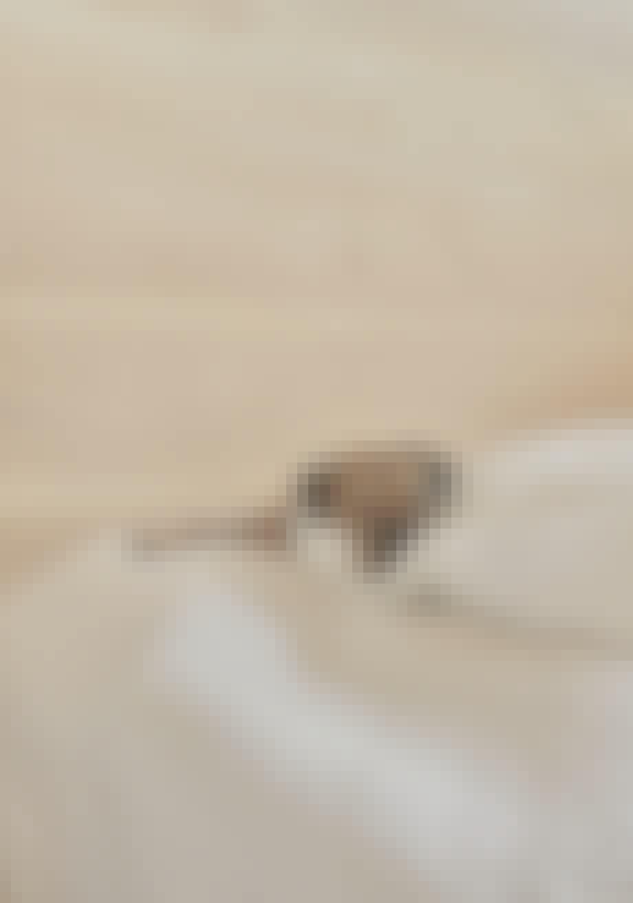 Hunden Qaya